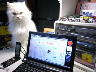 20090907_cat.JPG