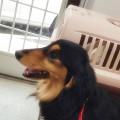 愛犬ソラ号